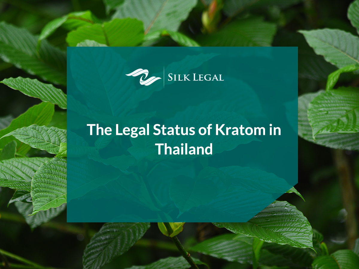 Globe's Finest Kratom For Anxiousness You'll Have The Ability To Purchase