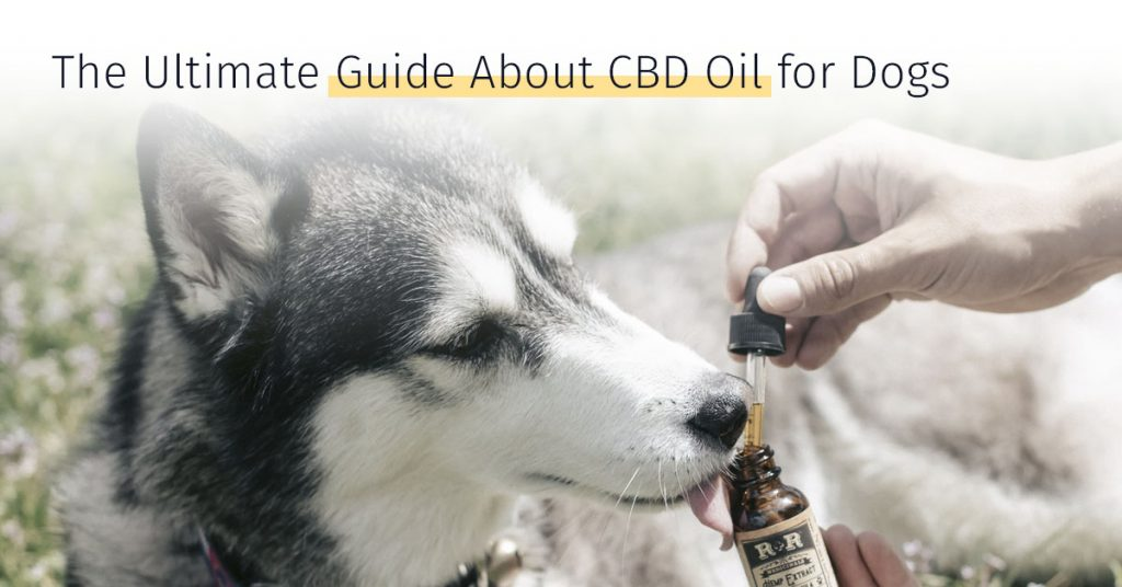 9 Ways Develop Much Better Cbd Oil For Pet Dogs With The Aid Of Your Pet Dog